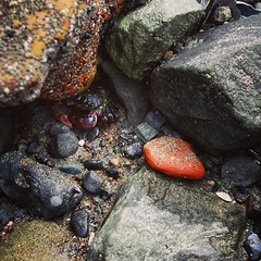 hey there, little fella #crab #tidepools... (szellner) Tags: sanfrancisco california beach nature crab norcal adventures tidepools seacreature oceanlife uploaded:by=flickstagram instagram:photo=8208269027258931371442850998