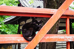 Today's Cat@2016-05-25 (masatsu) Tags: cat pentax catspotting mx1 thebiggestgroupwithonlycats