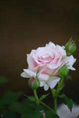 20160522-D7-DS7_2671.jpg (d3_plus) Tags: park street sky plant flower nature japan garden walking drive tokyo nikon scenery bokeh fine daily bloom   nikkor   kanagawa   dailyphoto touring     thesedays  fineday  jindaiji          d700 kanagawapref nikond700