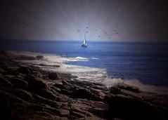 Sailor's Delight (Patricia McAtee - Photos of Maine) Tags: ocean sea seascape sailing atlantic serene seacoast mainecoast coastalmaine