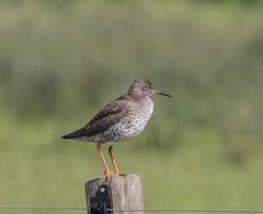 IMG_8273 (Mal.Durbin Photography) Tags: nature birds fauna wildlife insects naturereserve newportwetlands maldurbin goldcliffnewport