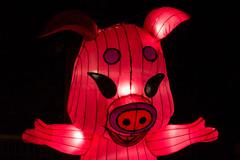 _DSC9666_2 (Elii D.) Tags: light fish flower animal night zoo monkey neon dragons lantern lampion dargon