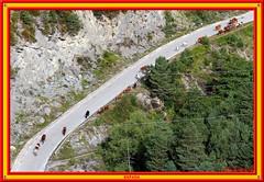 Horse Drive, Pyrenees (vicbrasil) Tags: barcelona madrid people men children spain women bilbao zaragoza santiagodecompostela montserrat oviedo sansebastian pamplona santillanadelmar