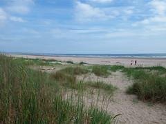 Sunday on the beach (nz_willowherb) Tags: beach forest scotland fife tentsmuir