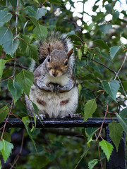 You talkin' to me! (wi-fli) Tags: england urban bristol squirrel funny unitedkingdom wildlife attitude mafia deniro youtalkintome capoditutti