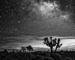 The Black of Night (MarcCooper_1950) Tags: park sky blackandwhite bw tree blanco monochrome night clouds stars landscape outdoors noir nightscape desert negro national nero milkyway josua nokon d810 binco marccooper