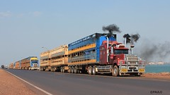 SUPERLINER SERIES 2 HAS A SMOKE (Paulo660) Tags: kenworth road train cattle livestock truck australia bulls heifer bullock cow cows