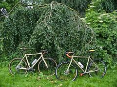 iconX_  20162016-06-1314-07-13 (C_Baltrusch) Tags: olive crossroad crossbones kafue madeofsteel stahlrad veloheld iconx bikespresso