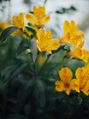 * (t*tomorrow) Tags: flower olympus  nokton omd em10 nokton25mmf095