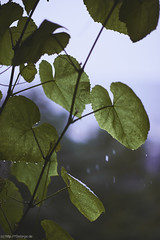 [ 365   182 ] (frau_k) Tags: window day view wine rainy 365 homesweethome 182