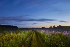 Lupin field (fandango206) Tags: lightpainting nature field night landscape smolensk