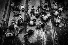 Las Palomas (atamos con alambre) Tags: roof blackandwhite food byn rain birds animal canon lluvia eating pigeon group aves pajaros feed palomas techo comiendo alimentargrupo