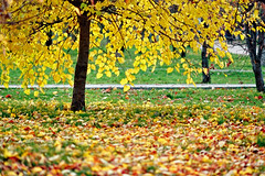 seasons_autumn_04004 (mzinin) Tags: autumn fall seasons   mzinin