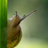 Jetons un oeil... / Let me cast an eye... (Michel Couprie) Tags: light macro eye nature backlight canon eos dof bokeh snail 7d escargot contrejour ef100mm