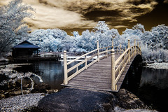 What's on the other side. (erglis_m (Mick)) Tags: bridge garden ir interesting canoneos20d infrared botanicalgardens coffsharbour infraredfilter
