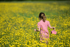 Bouquet hunting (mentalPICTURE) Tags: flowers wild portrait copyright david flower field yellow kids children kid nikon child natural buttercup bokeh meadow wildflower d800 hollingworth mentalpicture