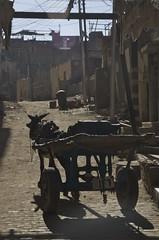 donkey car (Ren Mouton) Tags: street ezel egypt donkey aswan egypte straatbeeld tegenlicht  straat asuan  gascylinder  syene gasflessen ezelkar mir assoean  swentet