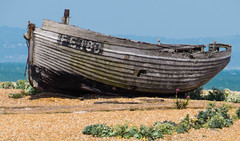 "Dungeness 11 • <a style=""font-size:0.8em;"" href=""http://www.flickr.com/photos/53908815@N02/9185159559/"" target=""_blank"">View on Flickr</a>"