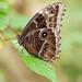 Stratford Butterfly Farm_7