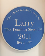 Larry the Downing Street cat's Battersea blue plaque (The Prime Minister's Office) Tags: larry blueplaque battersea batter batterseadogscatshome larrythecat downingstreetcat