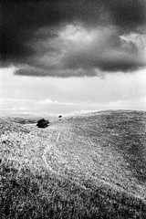 Monte Subasio, Spello (p1r0 (Ludovico Poggioli)) Tags: leica trees bw film clouds analog 35mm landscape grain d76 400 m2 summilux bergger subasio