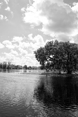 2013-268 (12Jeepgirl~Never look back...) Tags: sky bw tree clouds river blackwhite nikon florida arcadia peaceriver d700