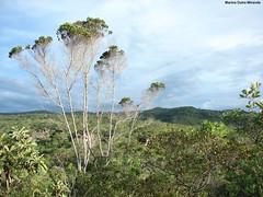 Cerrado!! Parque Estadual do Rio Preto, MG. (Marina Dutra Miranda) Tags: cerrado unidadedeconservao parqueestadualdoriopreto