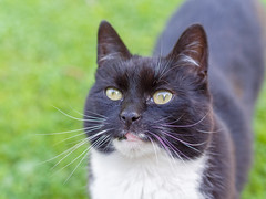 The Push-Push Cat (rasmusthepood) Tags: cat tuxedocat retouch lenses edits blackandwhitecat glutonia 45mm18olympusmzuiko