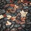 leaveonlyleaves #cobbles #pebbles #autumn #nothingisordinary #leaves... (Squazle) Tags: autumn leaves pebbles cobbles nothingisordinary uploaded:by=flickstagram royalsnappingartists rsanature rsaladies leaveonlyleaves instagram:photo=620956031459167254291124258