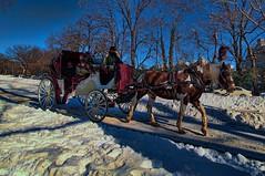 Central Park (nyperson) Tags: newyorkcity horse snow carriage centralpark
