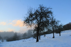 (:Linda:) Tags: baretree snow schnee germany thuringia village bürden mist appletree apfelbaum cloudysky