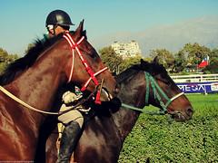 Horses (Marco San Martin) Tags: portrait horses horse club caballo retrato retratos clubhipico ridingclub equestrianclub marcosanmartin
