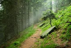 Misty wood (lightinstants) Tags: wood trees italy mist mountain nature landscape italia natura piemonte myst vision:mountain=079 vision:outdoor=0986 vision:plant=0863