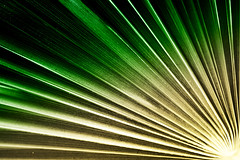 Palm Leaf (tampurio) Tags: tree verde green nature colors leaf natura palm foglia palma