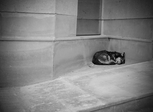sleeping dog in Yerevan
