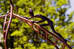 Equilibrium and Nature, Jos G. Onieva - Equilibrio y Naturaleza, Jos G. Onieva (ipomar47) Tags: madrid sculpture espaa naturaleza nature garden botanical spain pentax jose escultura jardn equilibrium botnico equilibrio k20d onieva