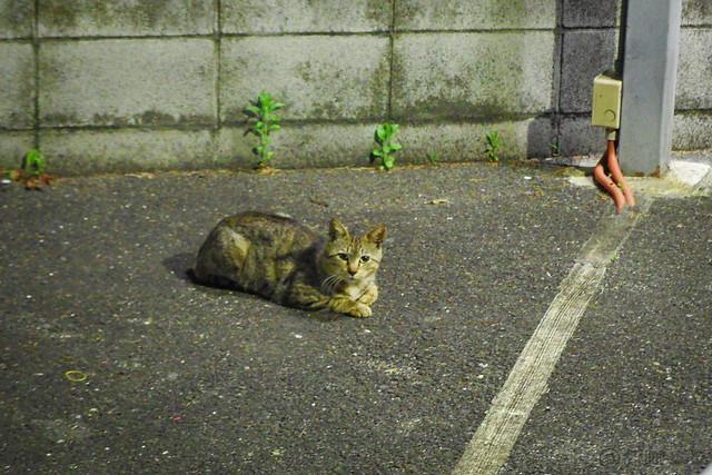 Today's Cat@2014-04-25