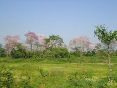 Verde Tabasco (Caneckman) Tags: naturaleza primavera sol arboles cielo tabasco