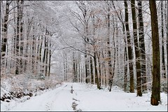 Une fort enneig....j'adore.... (Excalibur67) Tags: trees winter snow nature forest nikon hiver arbres neige d90 forts afsdx35f18g