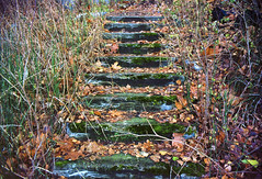 old stone steps (korolland) Tags: old autumn green cemetery grass yellow stone moss steps