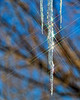 Starry-Ice (Daxcat) Tags: winter light cold ice glitter icicle icesickles