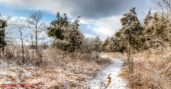 Ice Storm 2015 - Couchville Cedar Glade SNA (mikerhicks) Tags: winter panorama usa ice landscape geotagged unitedstates hiking tennessee hermitage hdr ptgui photomatix couchville canon7dmkii sigma18250mmf3563dcmacrooshsm couchvillecedargladesna geo:lat=3610171500 geo:lon=8653071333