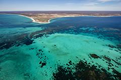WA Coral Bay - 4643