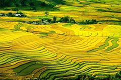 Mu Cang Chai, Vietnam (journey.symphonyoflove.net) Tags: travel vacation holiday travelling asia flight vietnam destination traveling saving riceterrace destinations travelpicture beautifulplace traveltip flightticket touristdestinations travelinformation cheapflight mucangchai amazingdestinations cheapflighttovietnam beautifuldestinations asiancountries tipsforflight cheapestflighttovietnam savingonflight tipfortravel
