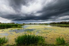 Aiguamolls Empord (juanluisgui) Tags: parque espaa spain agua natural paisaje girona cielo campo catalunya parc nube hierba aiguamolls empord humedal