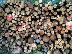 Bunte Holz (drloewe) Tags: wood dog madera labrador perro hund holz wald