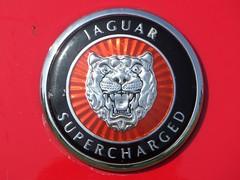 Jaguar XK_7056 (pjlcsmith2) Tags: car emblem crest badge jaguar carshow xk svec swalevehicleenthusistsclub