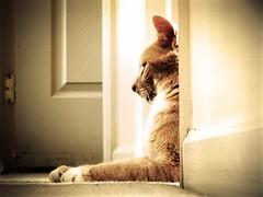 . (g ) Tags: door light pet animal wall cat doors side perspective angles hallway sit