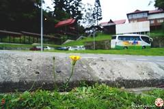 Kinabalu Park Entrance (fikqriey_94) Tags: nature malaysia mountkinabalu sabah naturalist sabahan kinabalupark aramaiti cuticutimalaysia tourismmalaysia travelicious sabahtanahairku sabahtanahtumpahnyadarahku proudtobesabahan mfosin