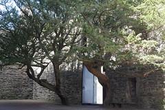 P9980586 (Patricia Cuni) Tags: castle scotland edinburgh escocia edimburgo castillo craigmillar